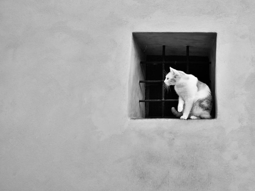 gatto (2).jpgsssa